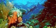 Des scientifiques australiens tirent la sonnette d'alarme pour la grande barriere de corail