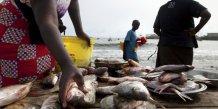 sénégal dakar poisson alimentation pêche halieutique littoral