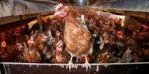 Oeufs contamines : deux arrestations aux pays-bas