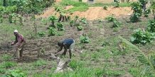 agriculture Togo