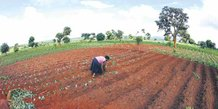 Terres arables agriculture malawi